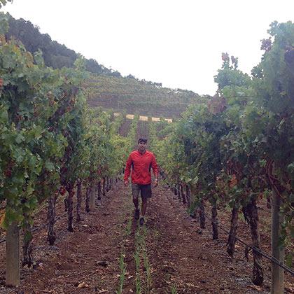 Winemaker Daniel LeFrancois in the vineyard